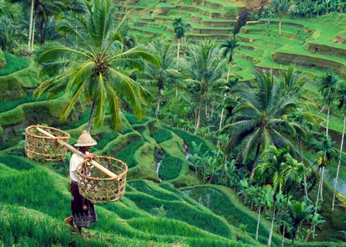 tegallalang-rice-terrace