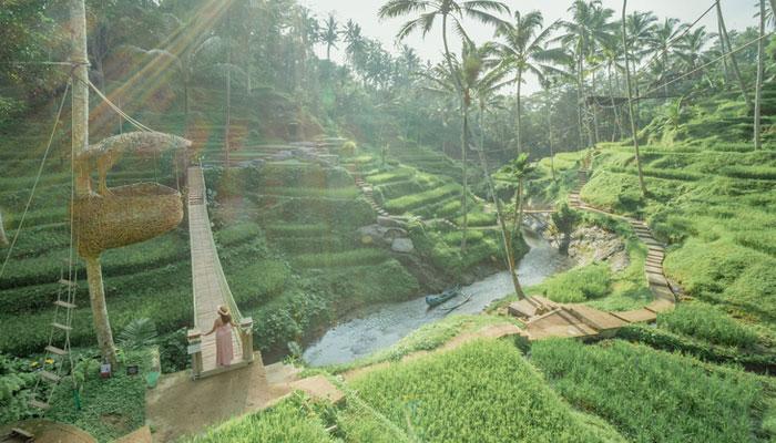 alas-harum-ricefield